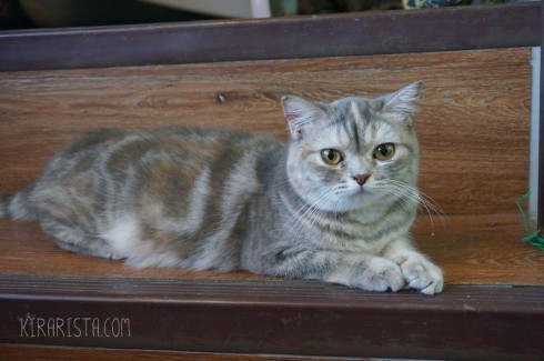 charming-cat-cafe_10-490x325