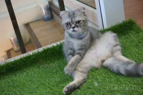 charming-cat-cafe_12-490x325