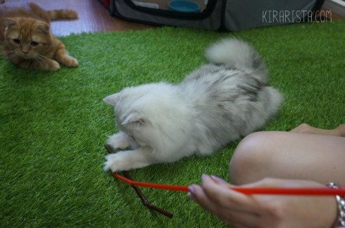 charming-cat-cafe_15-490x325
