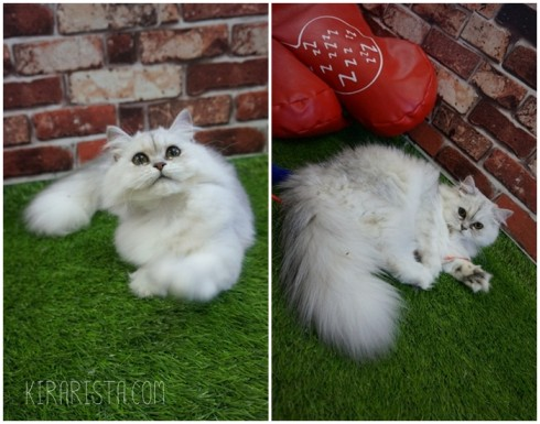 charming-cat-cafe_17-490x385