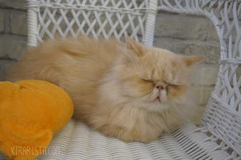 charming-cat-cafe_26-490x325