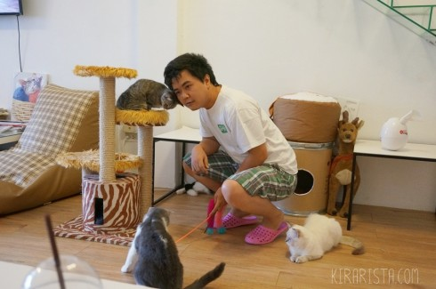 charming-cat-cafe_28-490x325