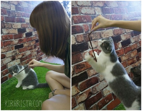 charming-cat-cafe_6-490x385