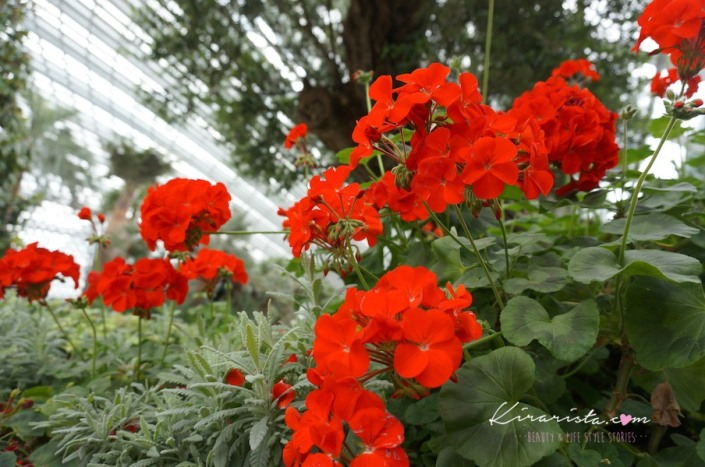 AirAsia_SG_GardenbytheBay_17