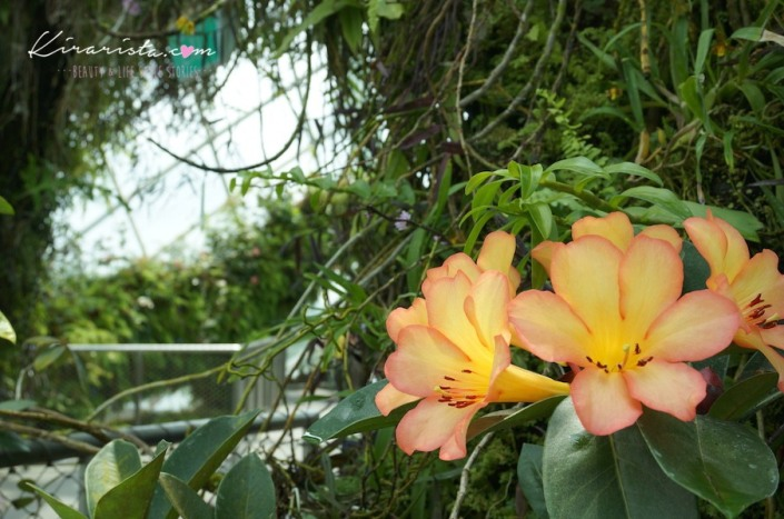 AirAsia_SG_GardenbytheBay_31