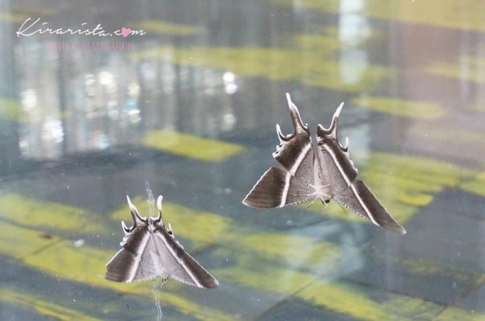 AirAsia_SG_GardenbytheBay_37