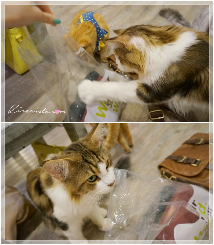 caturday cat cafe_10