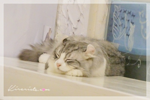 caturday cat cafe_21