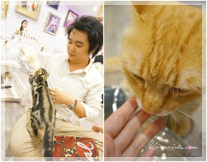 caturday cat cafe_23