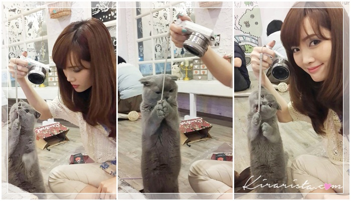 caturday cat cafe_33