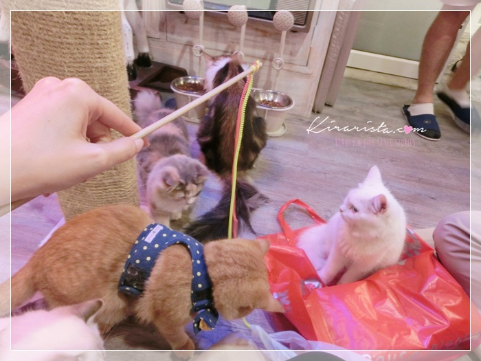 caturday cat cafe_46
