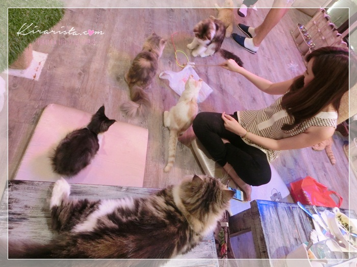 caturday cat cafe_47