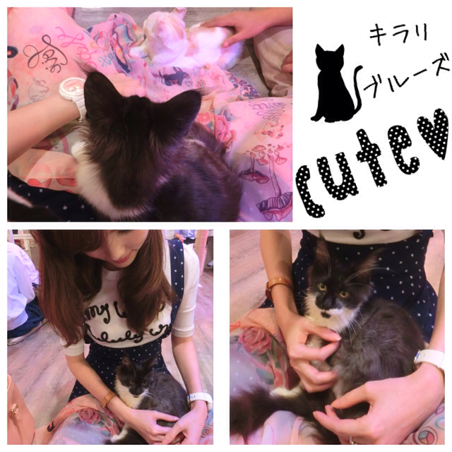caturday cat cafe_55