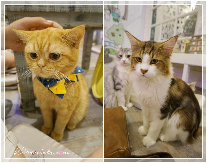 caturday cat cafe_9