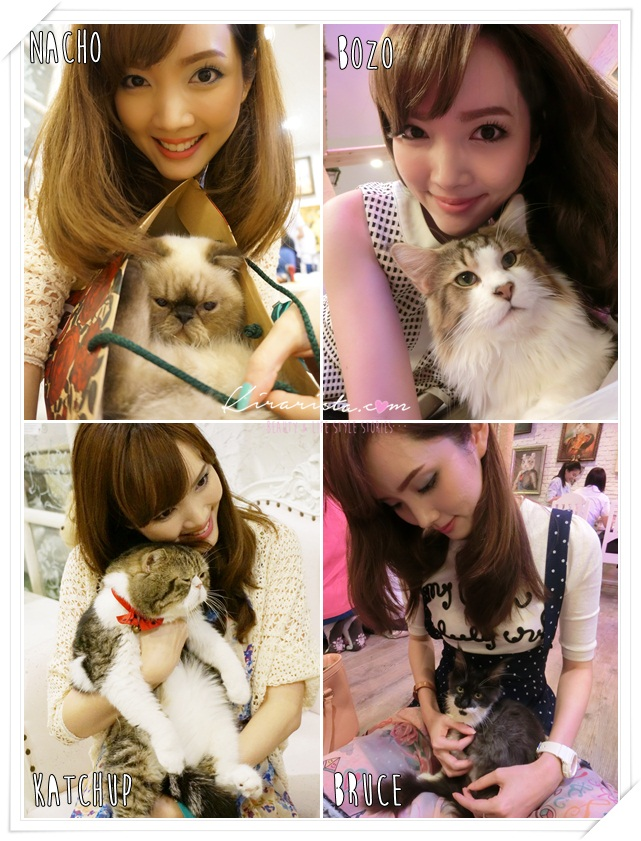 caturday cat cafe_kirari