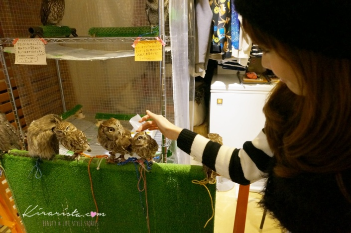 fukuro_no_mise_owl_cafe_8