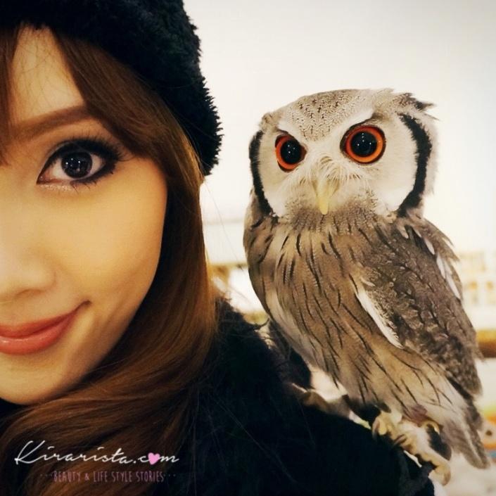 fukurou_no_mise_owl_cafe_2