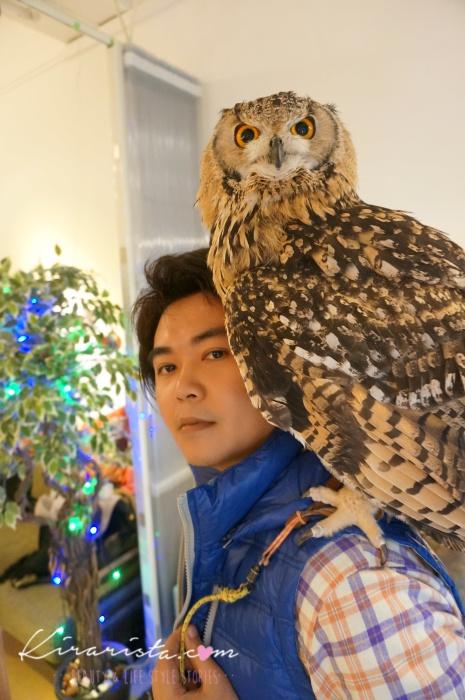 fukurou_no_mise_owl_cafe_22