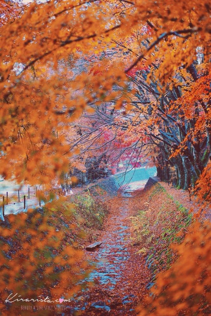 kawaguchiko_autumn11