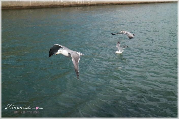 Tottori_trip_01_34